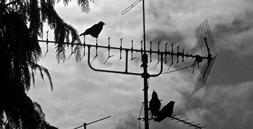 Michael Helming: Raben auf TV-Antenne