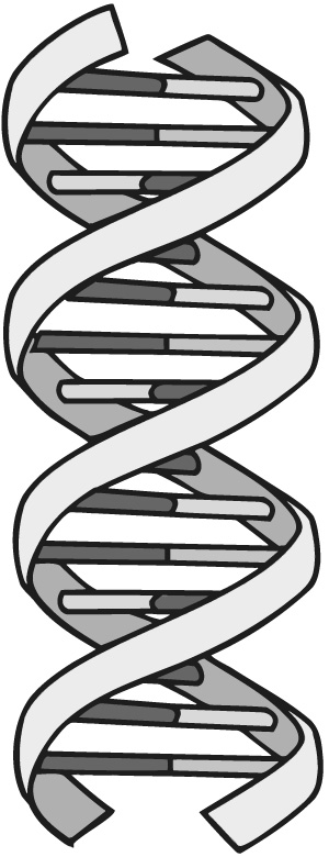 DNS-Helix